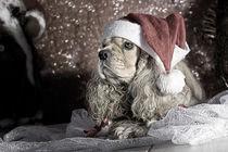 Wartend auf dem Weihnachtsmann von lauras