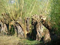 Stammbaum von Ka Wegner