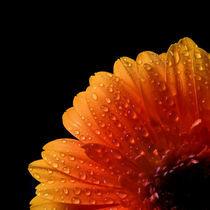 Wet-Sunrise von Michael S. Schwarzer