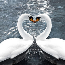 Swan-Love by Michael S. Schwarzer