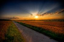 Schatten auf dem Weg des Lebens von Michael S. Schwarzer