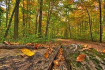 Herbstwald von Michael S. Schwarzer