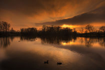 Good Night, Ducks von Michael S. Schwarzer