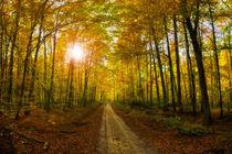 Herbstweg von Michael S. Schwarzer