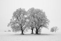 Winterlandschaft von Michael S. Schwarzer