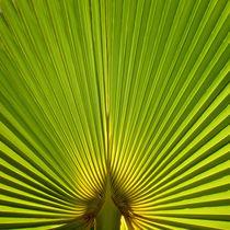 Natural Green von Michael S. Schwarzer