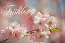 Frühling von Michael S. Schwarzer