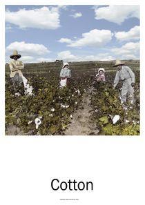 Cotton von Willi Halbritter