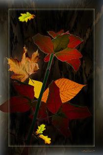 Herbstlich von Bruno Santoro
