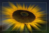 Sonnenenergie by Bruno Santoro