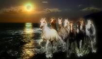 Sunset horses by Bruno Santoro