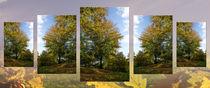 Farbiger Herbst von Bruno Santoro