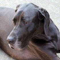 Portrait Dogge von Ina Hartges