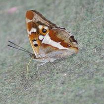 Schmetterling von Ina Hartges