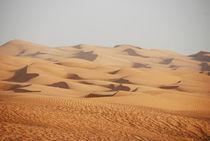 Die Wüste von Harald Winter