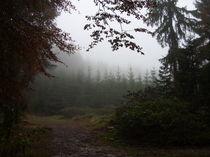 Herbstwald von Eva-Maria Oeser