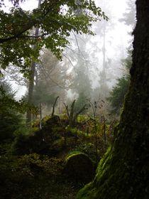 Herbst im Walde von Eva-Maria Oeser