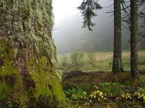 Herbstnebel von Eva-Maria Oeser