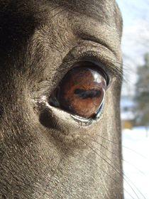 Augen-Blick von Eva-Maria Oeser