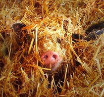 Ich seh dich ... by Eva-Maria Oeser