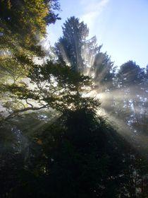 Nebelzauber 2 von Eva-Maria Oeser