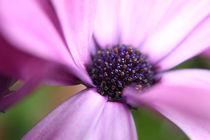 Blütentraum by Diana Wolfraum