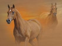 Sandsturm by Diana Wolfraum