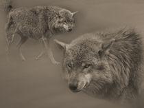 Wolf von Diana Wolfraum