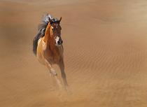 Wüstenpferd von Diana Wolfraum