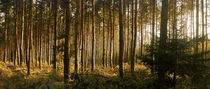 Herbstwald by elke krause