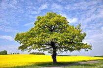 mein Freund der Baum by astra1960