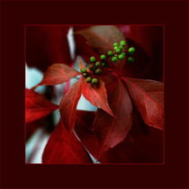 Herbst-ROT mit kleinen grünen Beeren von pichris