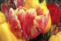 springtime by pichris