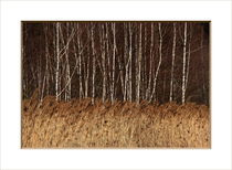 Die natürliche Grenze am Moor von pichris