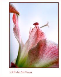 Auch Blumen haben Gefühle von pichris
