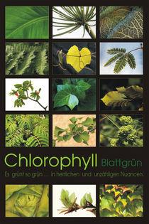 Chlorophyll - Blattgrün von pichris