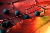 Herbstfarben by pichris