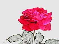 Rose von Valérie Salvetti