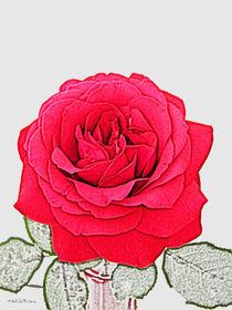 Rote Rose von Valérie Salvetti