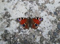 Schmetterlingspause von Nicole Milkoweit