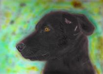 Hündin Xena - The Dog von ropo13