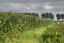 Rand eines Maisfeldes - Edge of a cornfield by ropo13