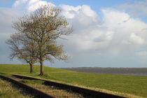 Bäume am Gleis by ropo13