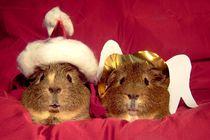 Meerschweinchen als Nikolaus und Christkind von Wildis Streng