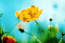 Gelbe Blume  von Wildis Streng