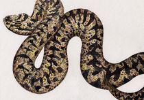 Kreuzotter Schlange Aquarell von Wildis Streng