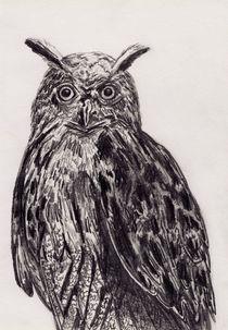 Waldohreule Zeichnung von Wildis Streng
