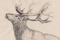 Röhrender Hirsch Zeichnung by Wildis Streng