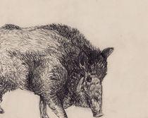 Wildschwein Zeichnung von Wildis Streng