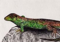 Eidechse Zeichnung by Wildis Streng
